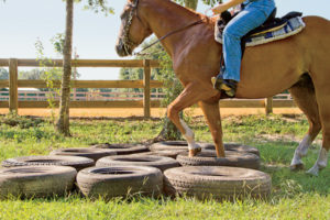 Newby made his own obstacle course to help train horses and their riders.