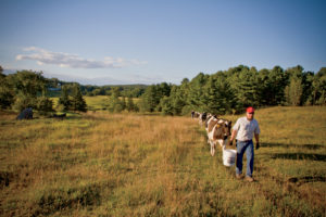 Dairy cows get time in the pasture at the Fairfax farm.
