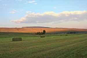 With a little coaxing, fields in the Ohio Creek Valley near Gunnison grow high-quality hay.