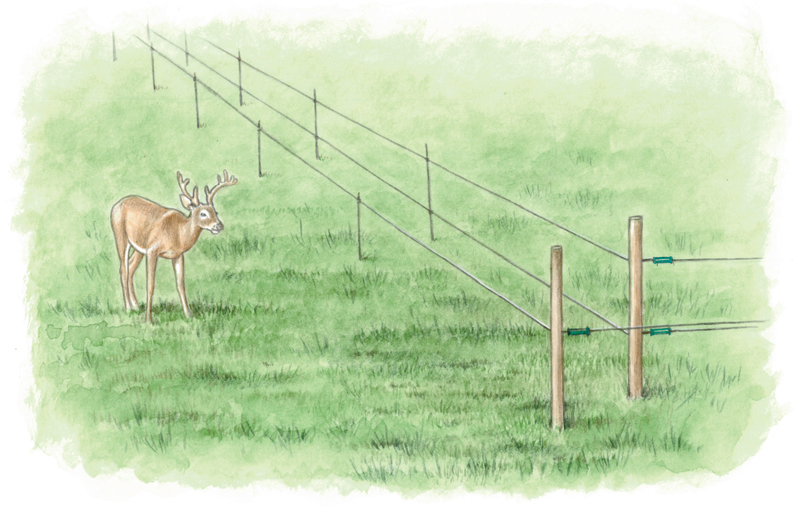 Shock Therapy The Right Electric Fence For Your Farm