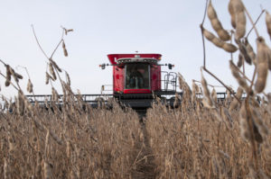 Crop conditions can affect the performance of your combine. Photo by Denny Eilers