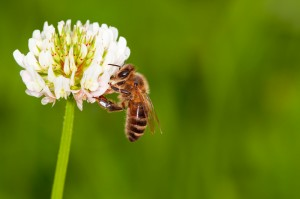 Today, bees are disappearing at a near-catastrophic rate.