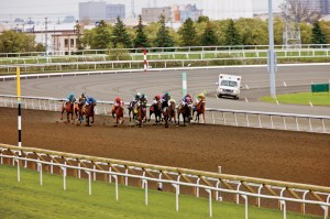 A track in a track in a track. Thoroughbreds running on Polytrack are flanked by hard dirt for harness racing on the inside, and on the outside by the E.P. Taylor Turf Course.