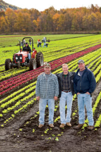 The Morgiewicz brothers, Dave, Joe and Dan, replant in their farm's rich, coal-black soil just weeks after hurricane Irene washed out some 70% of their income for the year.