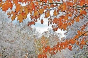 Freezing temps aren't great for fall color.