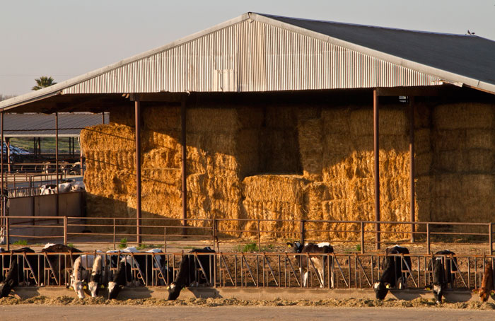 4 Best Tips For Storing Hay