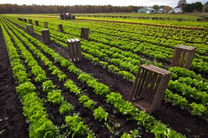 Late summer and early fall are perfect times to get in a planting of greens for harvest before the first frost.