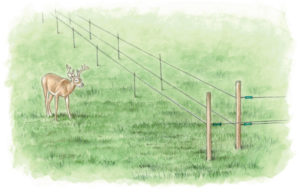 A 3-D fence will help keep deer out.