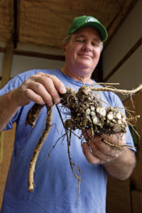 Barry McMillin says you can grow horseradish yourself.