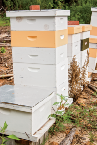 Beekeeping has benefits for both farmers and gardeners.