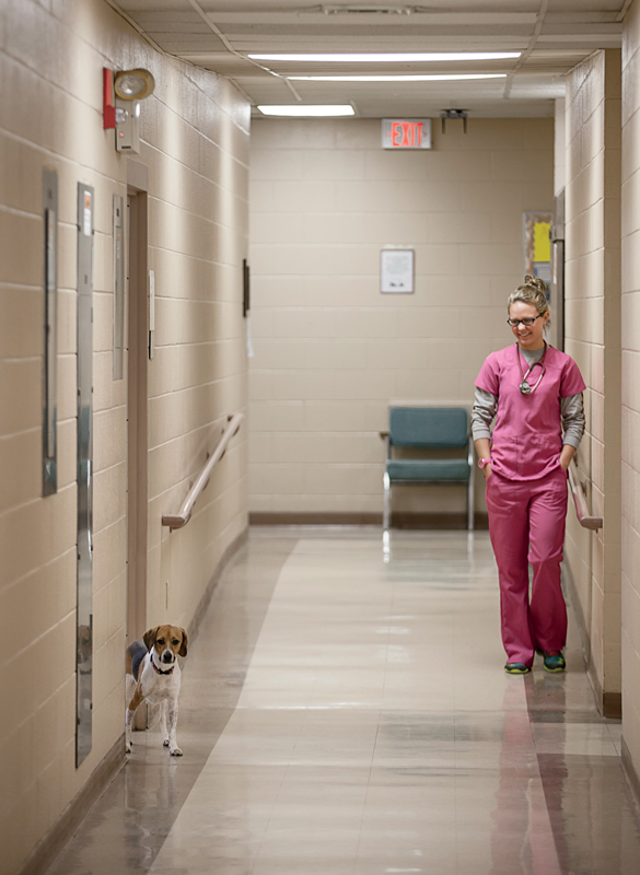 Gracie, who slinks among students under the lab tables in a vet tech class, peeks out into the hall, with her owner Emily Breitkeitz.