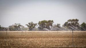 Sprinklers in a field managed by Kibbutz Nirim.