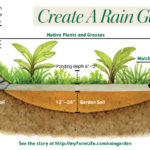 CLICK TO ENLARGE and see the layout of the rain garden.