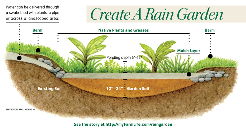 How to create a rain garden for Create garden design