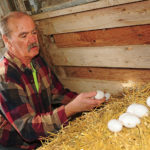 Ron Thompson collects eggs, which he only sells from his farm.