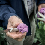 Hand holding cauliflower